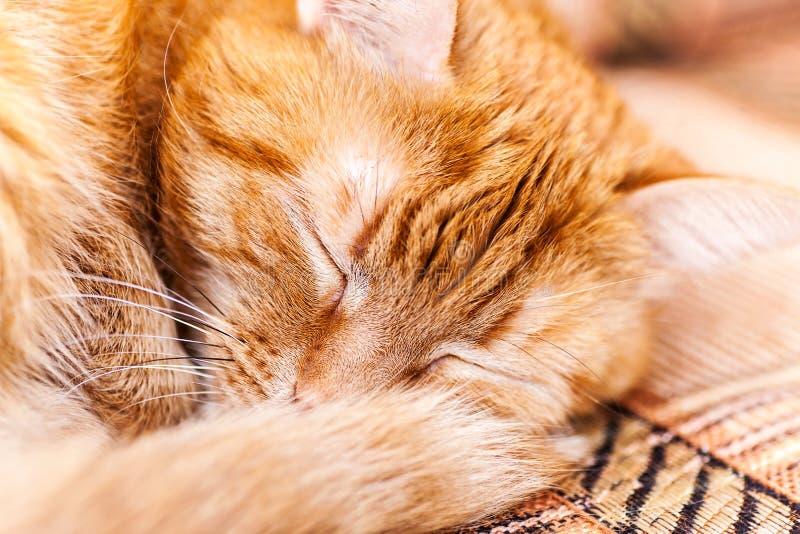 Rote Katze schlafend stockfotos