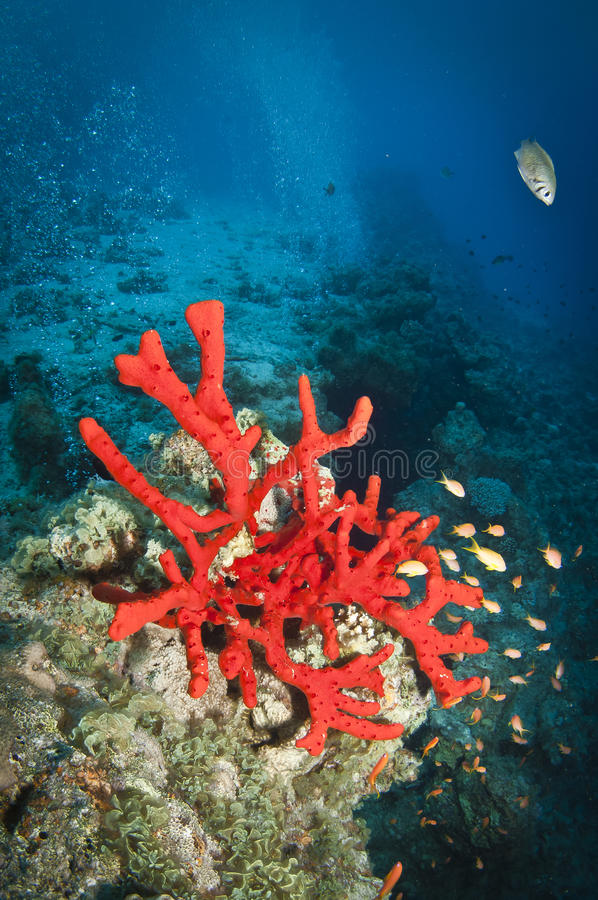 unterwasserschlucht im korallenriff stockfoto  bild von