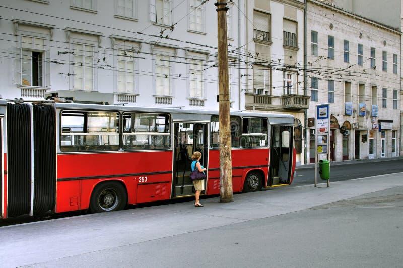 Rote Laufkatze, Bukarest, Ungarn lizenzfreie stockfotografie