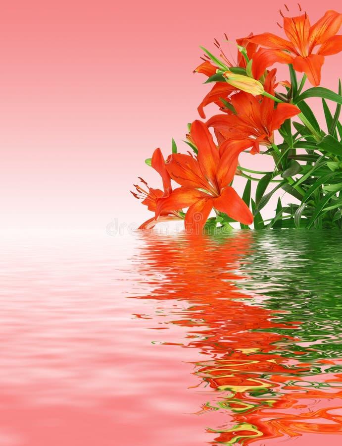 Rote Lilien stockbild