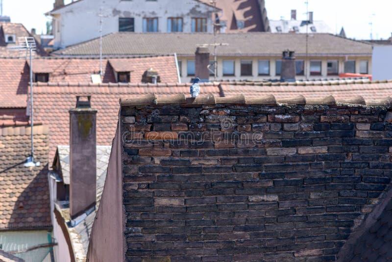 Rote mit Ziegeln gedeckte Dachspitzen in einer Stadt mit Antennen stockfotografie