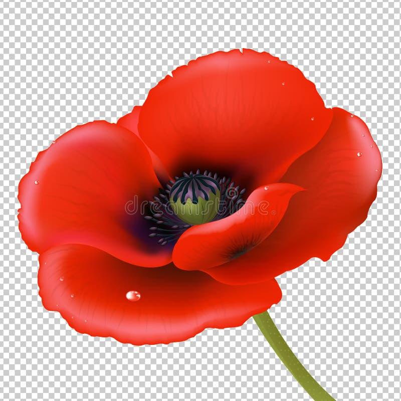 Rote Mohnblume vektor abbildung