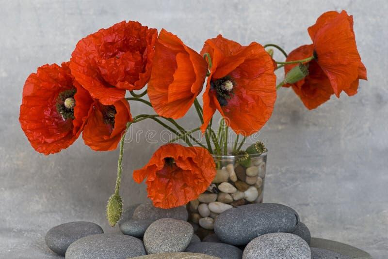 Rote Mohnblumeblume stockfotografie
