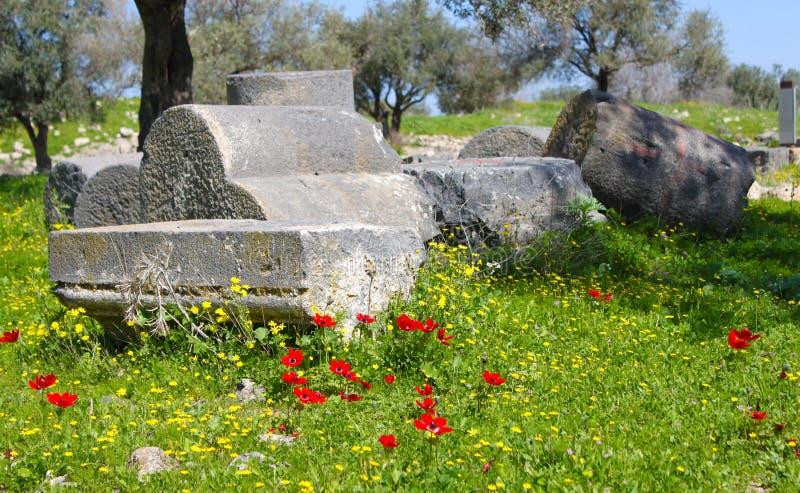 Rote Mohnblumen in den römischen Ruinen lizenzfreie stockfotos
