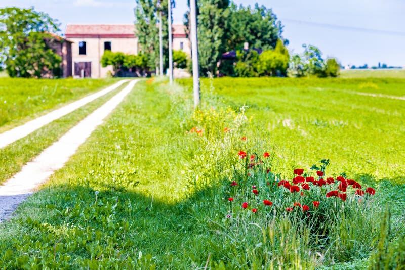 Rote Mohnblumen und Bauernhaus stockfoto