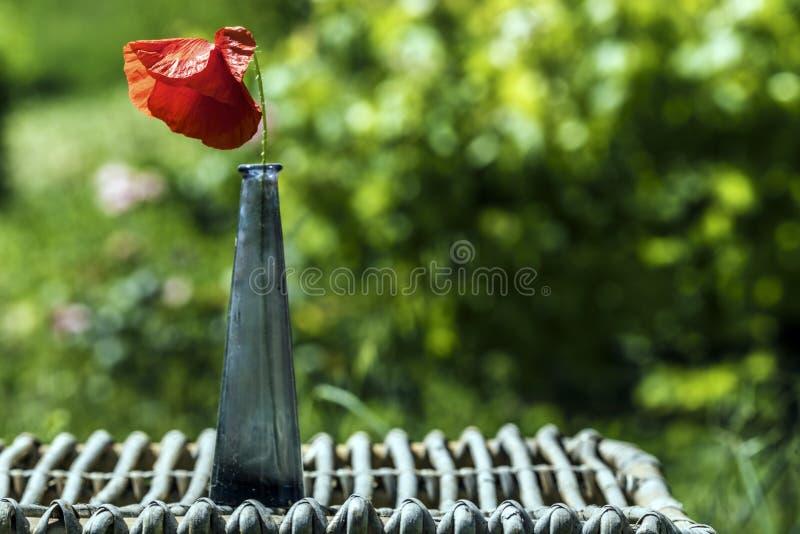Rote Mohnblumenblume auf einer kleinen blauen Glasflasche lizenzfreies stockbild