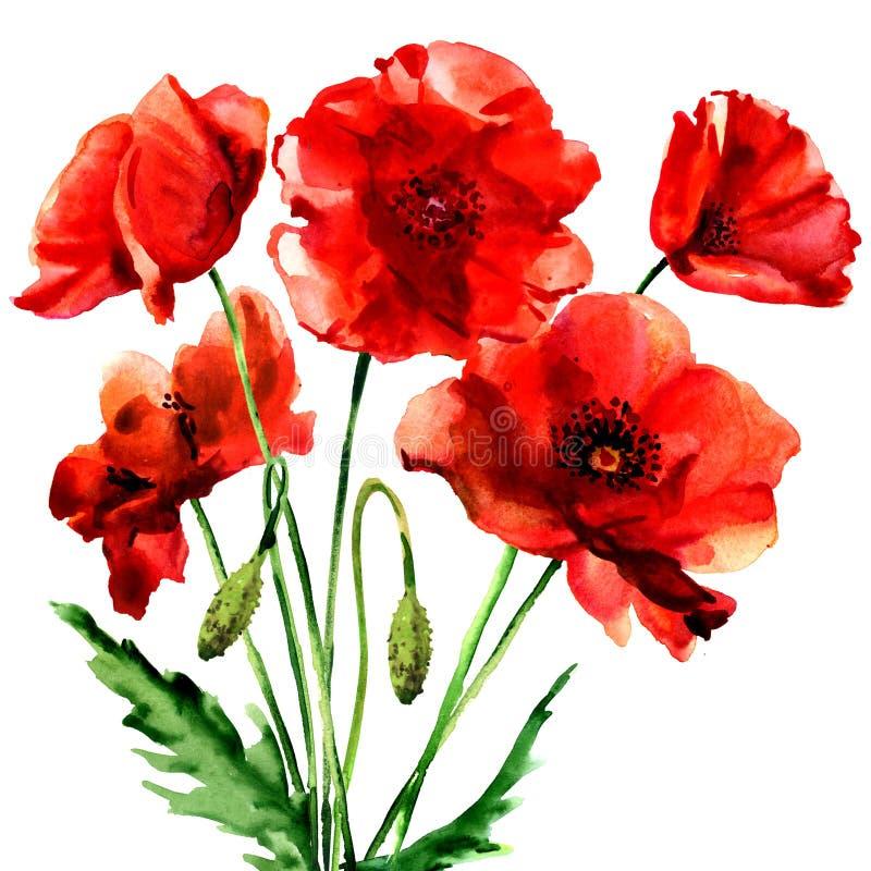 Rote Mohnblumenblume des romantischen Sommers lokalisiert, Aquarellillustration auf Weiß vektor abbildung