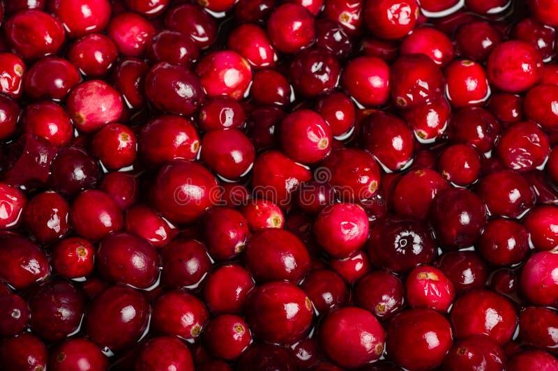Rote Moosbeeren im Soßentopf lizenzfreies stockfoto