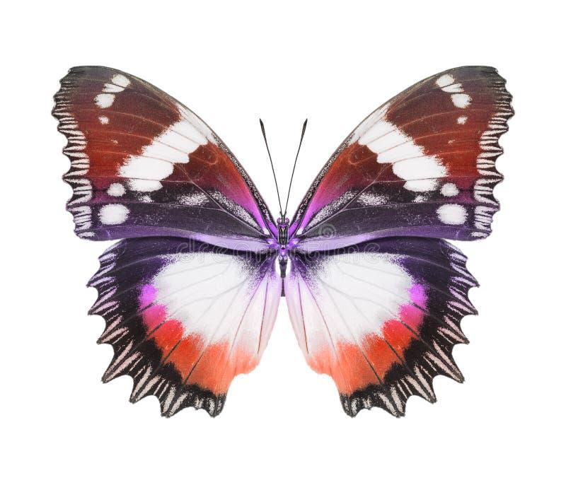 Rote Orange des Schmetterlinges stockfoto