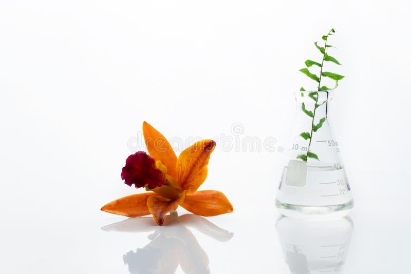 Rote orange elegante Orchideenblume mit Glaswissenschaftsflasche mit Wasser und grünem Blatt im Biotechnologielaborweißen Hinterg stockbilder