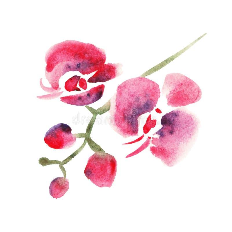 Rote Orchidee lizenzfreie abbildung
