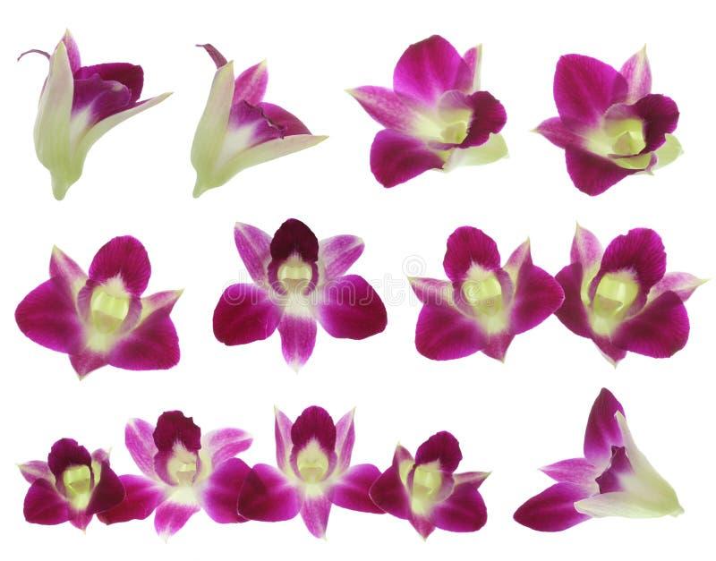 Rote Orchideen Lizenzfreies Stockfoto