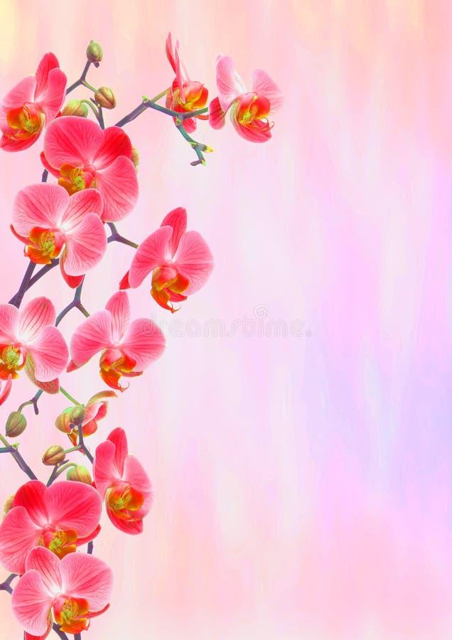 Rote Orchideen-Grußkarte lizenzfreie stockfotos
