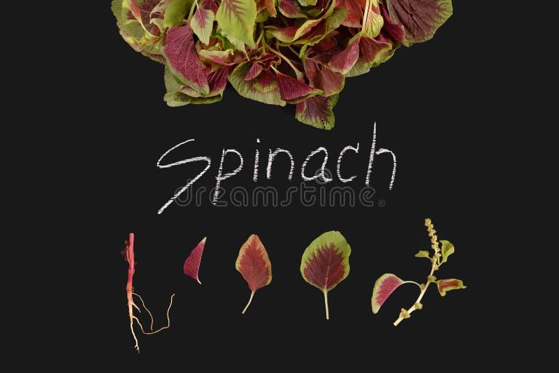 Rote organische Tafel des Frischgemüses des Spinats stockbild