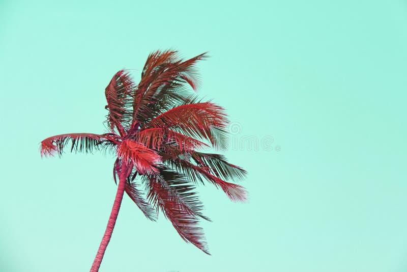 Rote Palmeschattenbilder gegen Pastellsonnenuntergang auf einem hellen gree stockfoto
