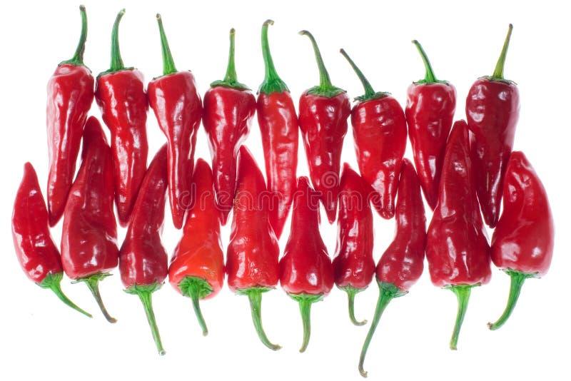 Rote Paprikas lizenzfreies stockbild