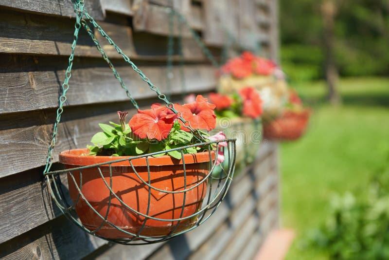 Rote Petunienblumen in hängenden Töpfen unter den Fenstern eines Landhauses stockfotos