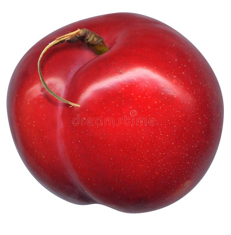 Rote Pflaume mit Stamm stockbild