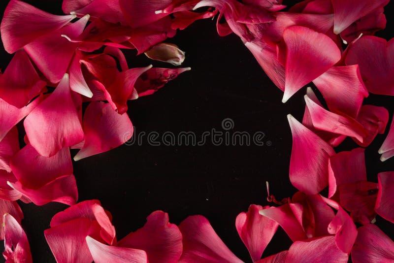 Rote Ranunculusblumenblumenblätter auf schwarzem Hintergrund Dunkles Foto lizenzfreies stockbild