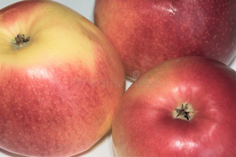 Rote reife Äpfel auf einer weißen Hintergrundnahaufnahme stockfotos