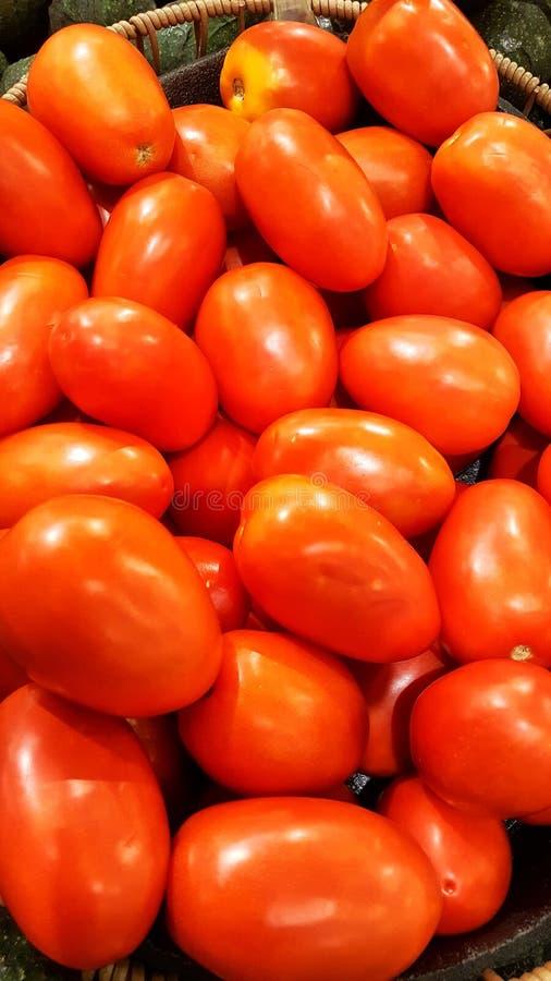 Rote Rom-Tomaten stockfotos