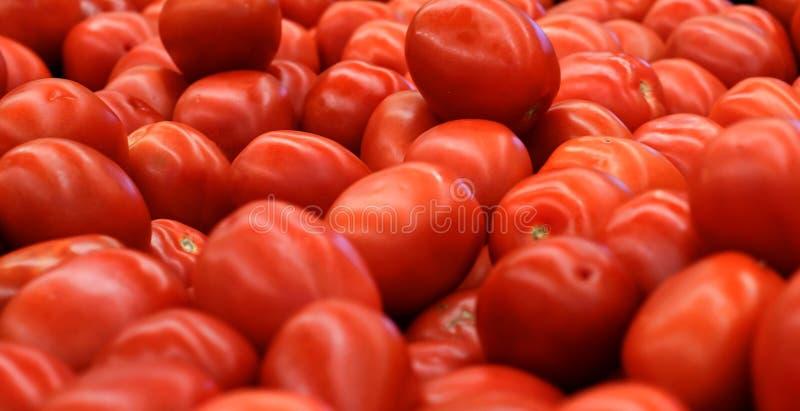 Rote Rom Tomaten Fresg lizenzfreies stockbild