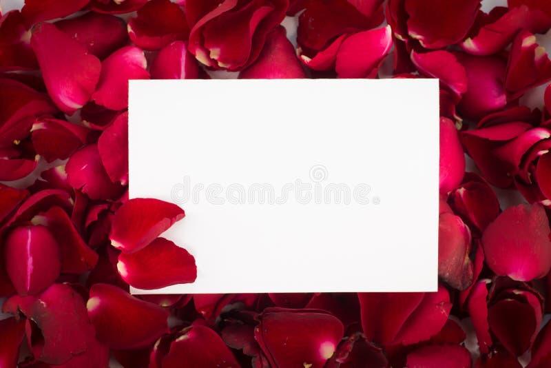 Rote rosafarbene Blumenblätter der Grußkarte mit leerem Mitteilungs-Zeichen für Ihr stockbild