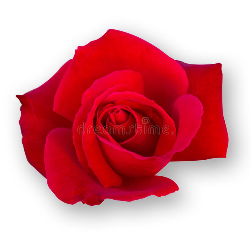 Rote Rose lizenzfreies stockbild