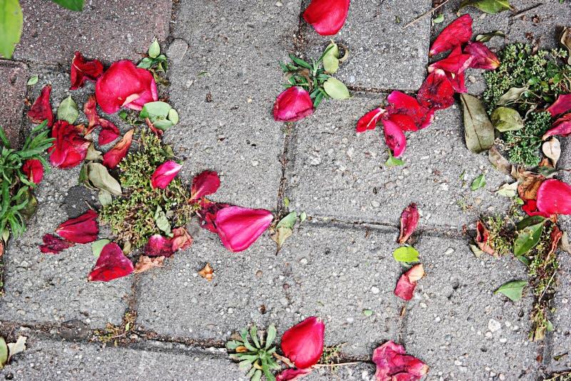 Rote Rose Leafs lizenzfreie stockfotos