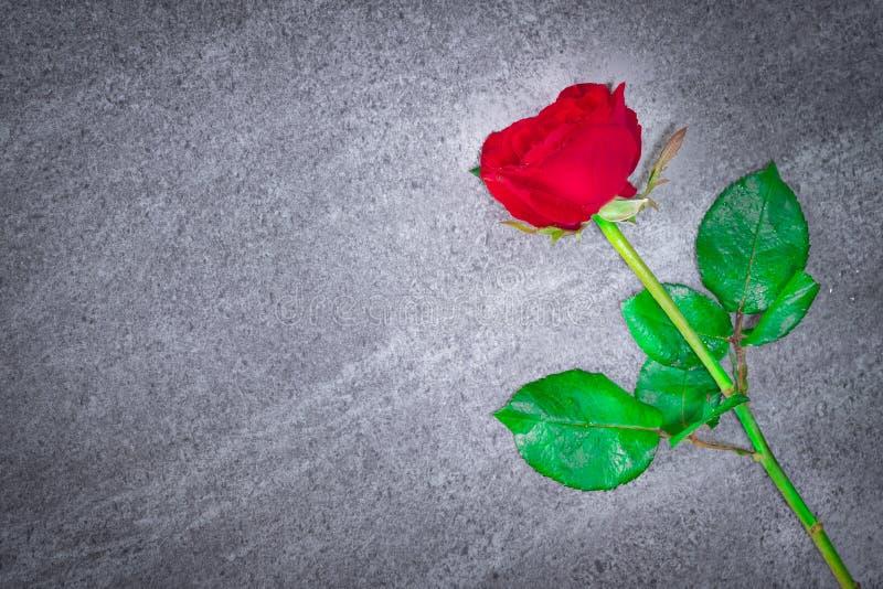 Rote Rose mit dem Blattstiel gesetzt auf Steintabelle Kopieren Sie leeren Raum stockbild