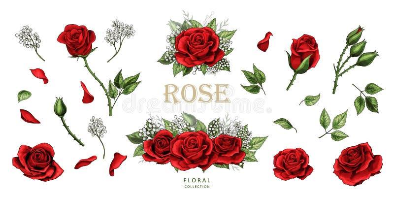 Rote Rosen übergeben Farbsatz der gezogenen Illustrationselemente lizenzfreie abbildung