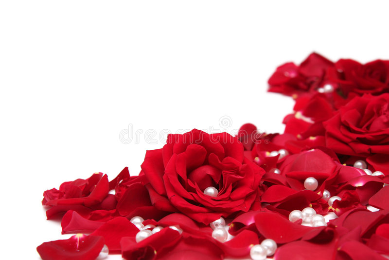 Rote Rosen lizenzfreie stockfotografie