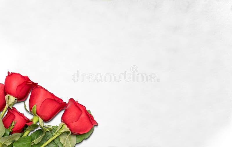 Rote Rosen auf dem Boden stockfoto