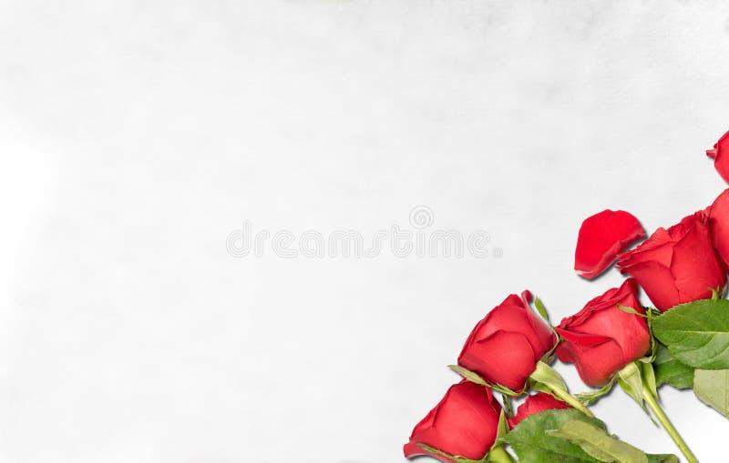 Rote Rosen auf dem Boden stockbilder