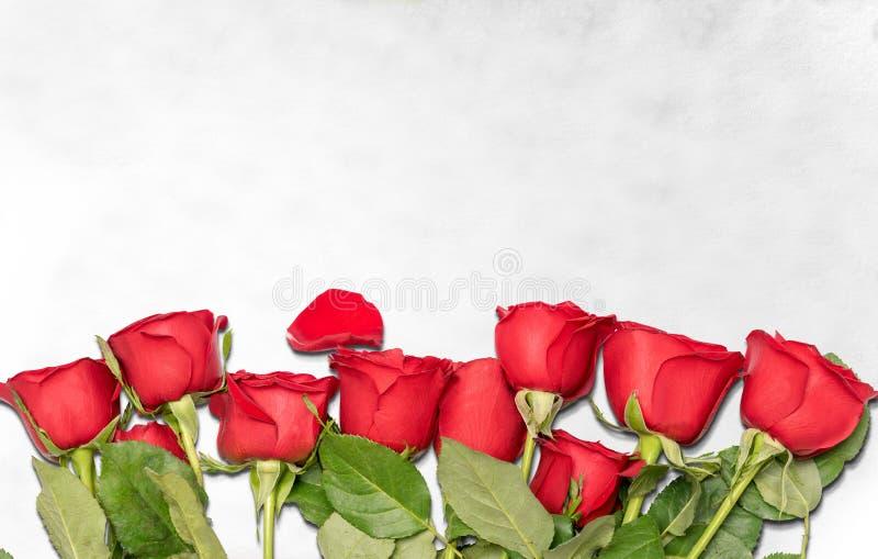 Rote Rosen auf dem Boden lizenzfreie stockbilder