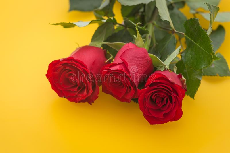 Rote Rosen auf dem gelben Hintergrund stockfoto