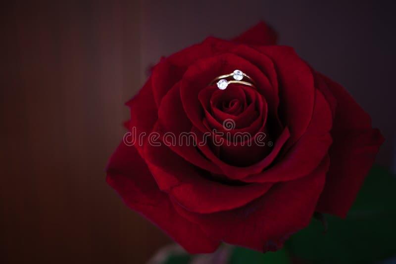 Rote Rosen auf dem Sonnenaufflackernhintergrund stockfotos