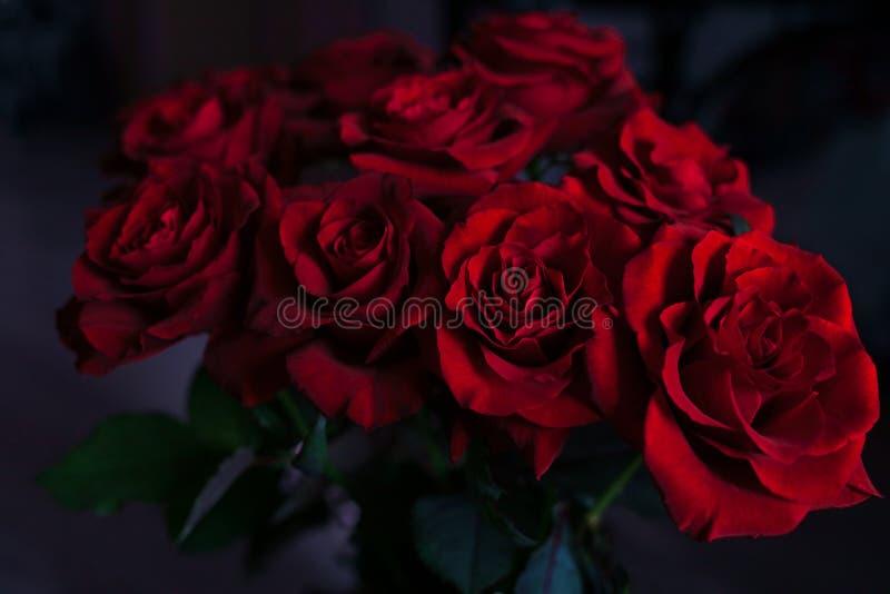 Rote Rosen auf dem unscharfen Hintergrund stockbild