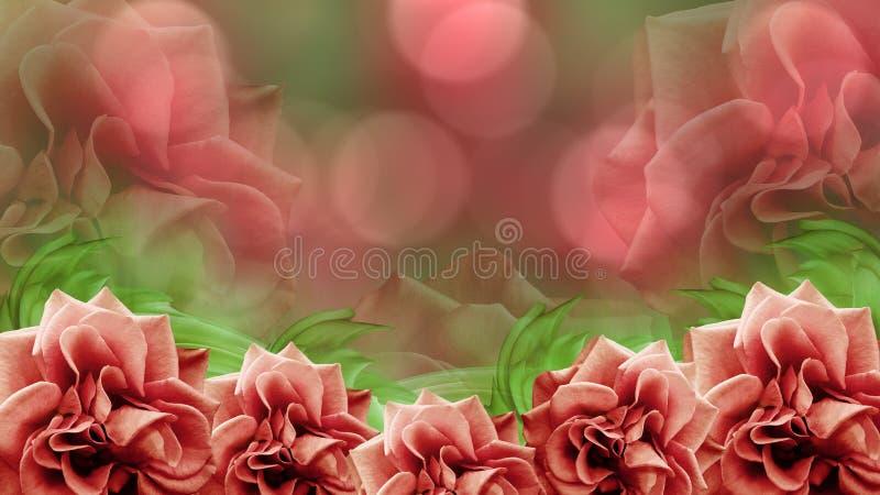 Rote Rosen blüht auf unscharfem rot-grünem bokeh Hintergrund Ausführliche vektorzeichnung farbige Tapete für Design lizenzfreie abbildung