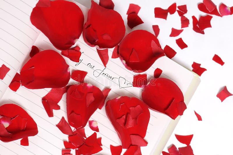 Rote Rosen-Blumenblätter in den Stücken stockfotos