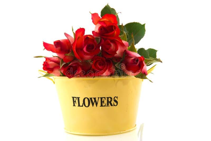 Rote Rosen in der gelben Wanne lizenzfreie stockbilder