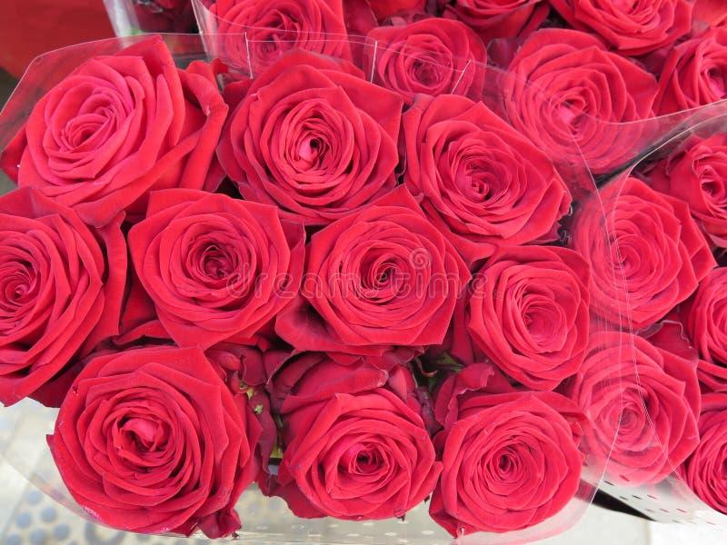 Rote Rosen im Detail stockfoto