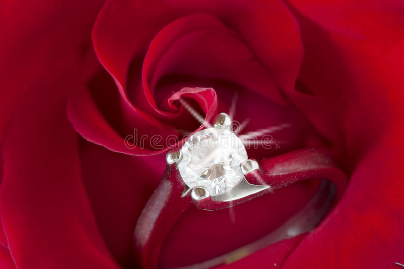 Rote Rosen und Eheringe stockfotos