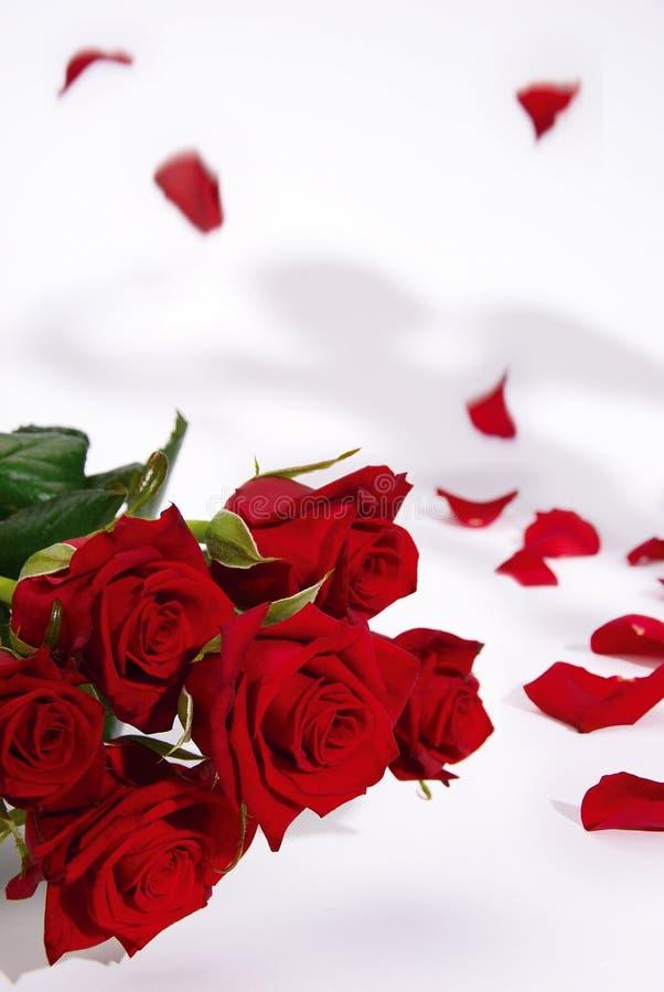Rote Rosen und fallende Blumenblätter lizenzfreies stockfoto