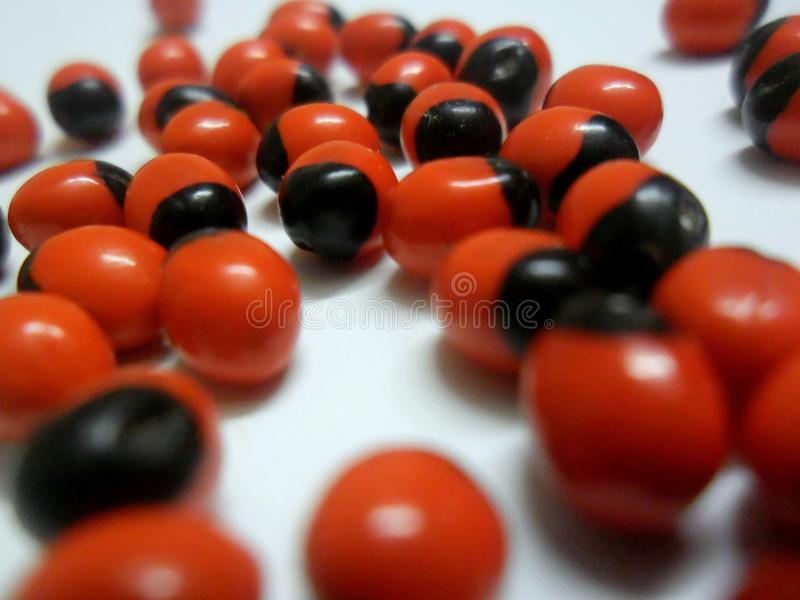 Rote Samen lizenzfreies stockfoto