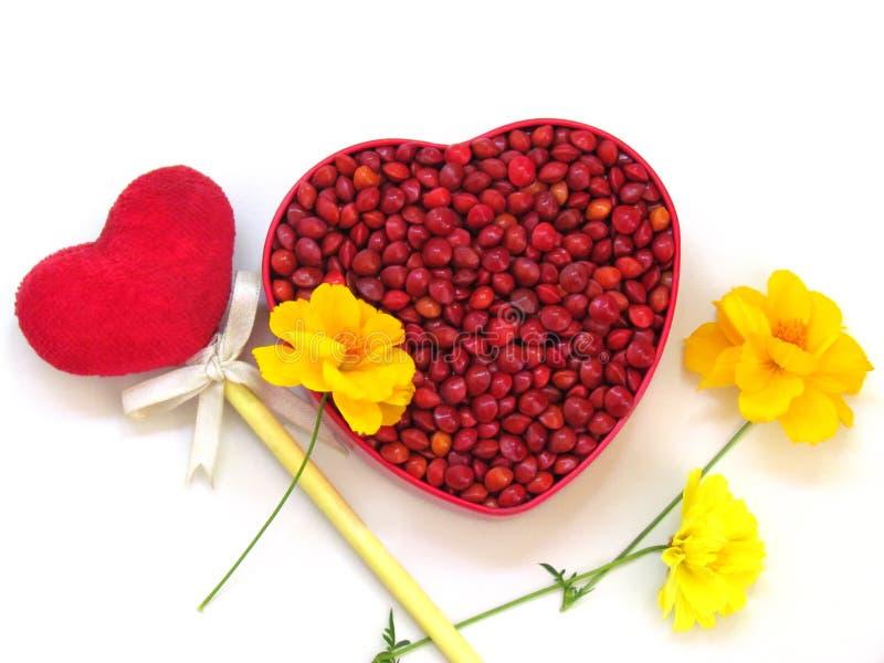 Rote Samen sind in einem roten Herz-förmigen Kasten und in einem roten Herzen auf einem Stock, der mit gelben Kosmosblumen verzie stockbilder