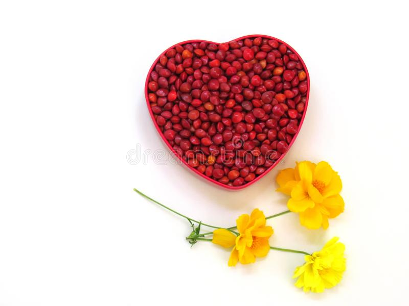Rote Samen sind in einem roten Herz-förmigen Kasten und verziert mit gelben Kosmosblumen lizenzfreie stockfotografie