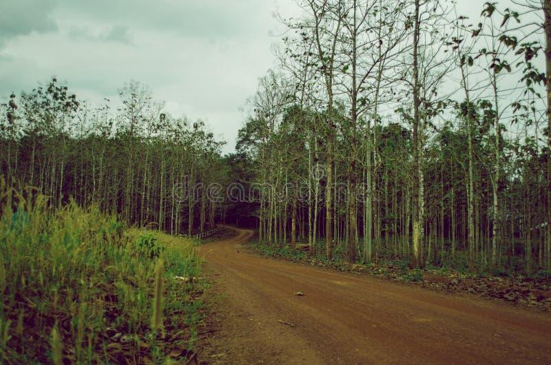 Rote Schotterstraße, die zu einen Teakholzwald führt stockbild