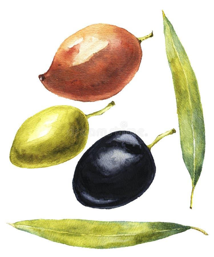 Rote, schwarze, grüne Oliven mit Blättern vektor abbildung