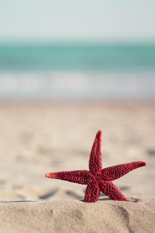 Rote Starfish auf dem Strand, vertikal stockfotos